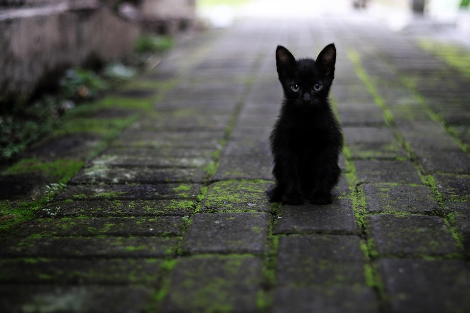 cat-3169476_960_720.jpg