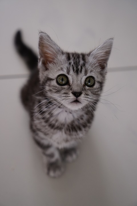cat-3290729_960_720.jpg