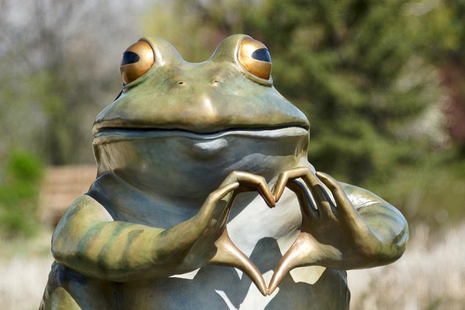 frog-3363217_960_720.jpg