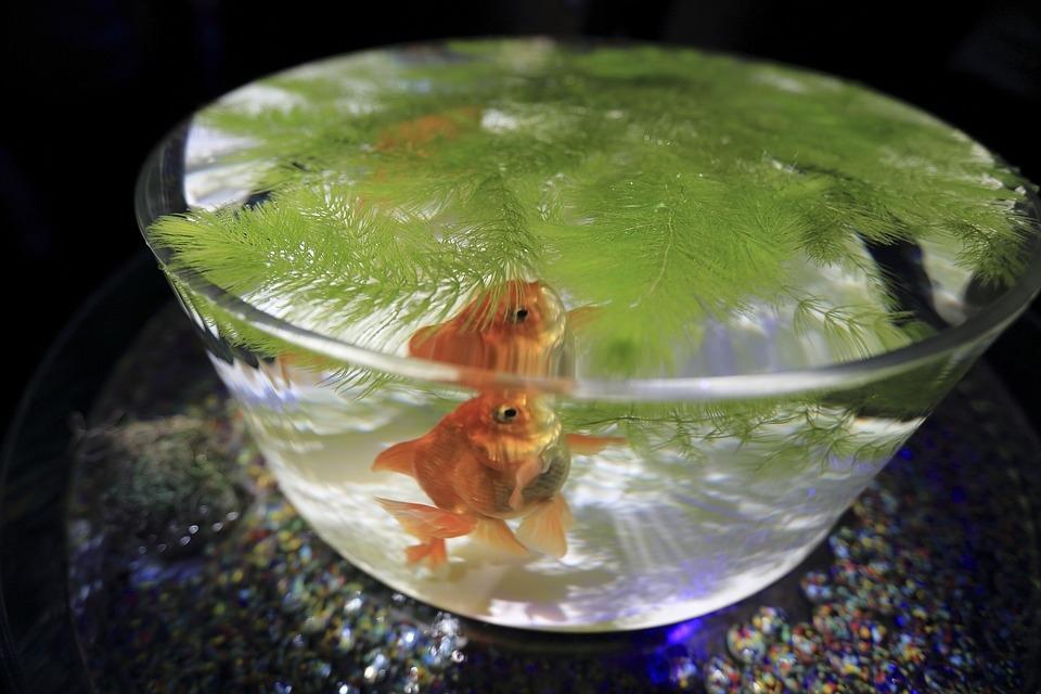 aquarium-2573576_960_720.jpg