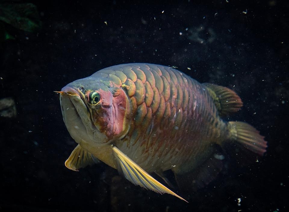 fish-2318666_960_720.jpg