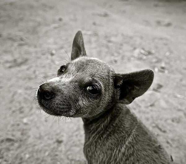 dog-589002_960_720.jpg