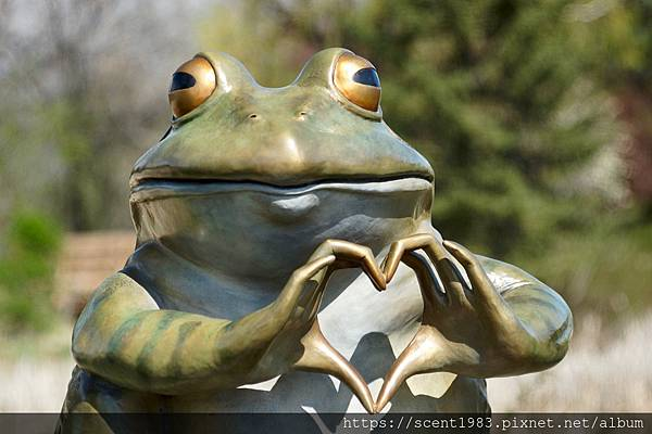 frog-3363217_960_720