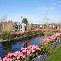 tulip 018.jpg