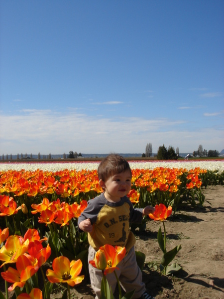 tulip 031.jpg