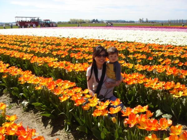 tulip 032.jpg