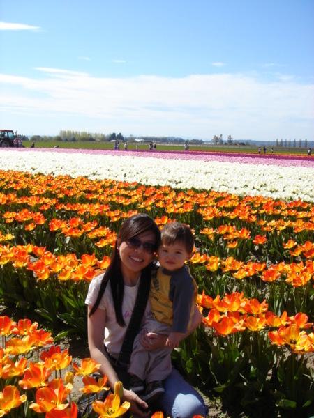 tulip 033.jpg