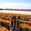 tulip 034.jpg