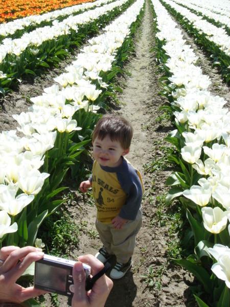 tulip 037.jpg