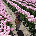 tulip 041.jpg