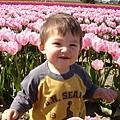 tulip 042.jpg