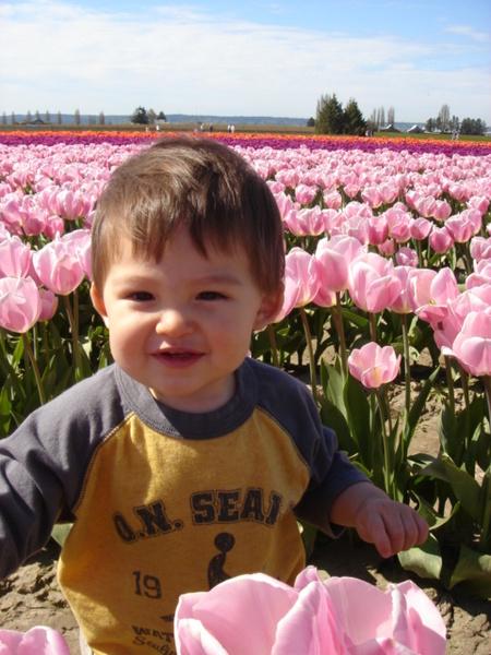 tulip 043.jpg