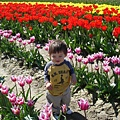 tulip 048.jpg