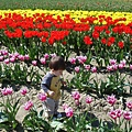tulip 047.jpg