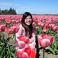 tulip 053.jpg