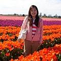 tulip 059.jpg