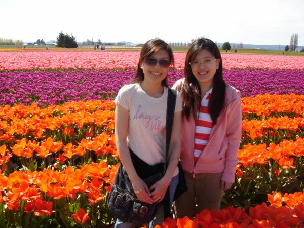 tulip 061.jpg