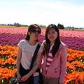 tulip 062.jpg
