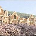college-visits-seattle-washington-university-blossoms-full.jpg