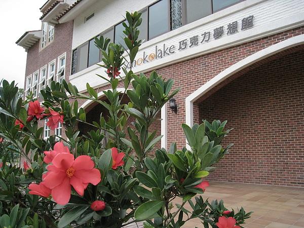 杜鵑茶花 (2).JPG