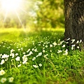 white-wildflowers-in-meadow-under-tree-on-sunny-day.jpg