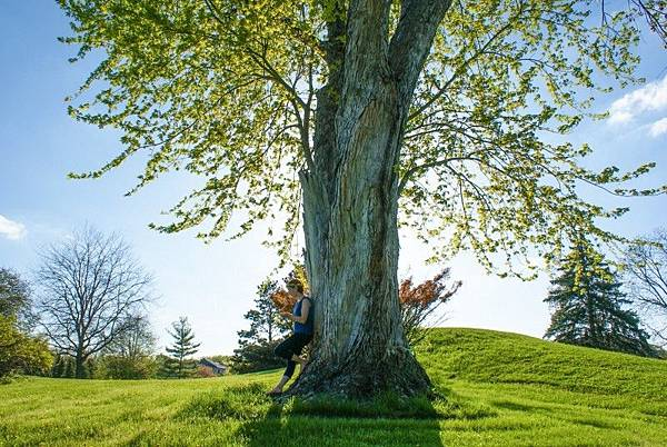 spring-big-tree-trunks.jpg