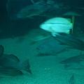 大洋池海底隧道下