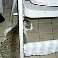 闖進寢室的小貓..