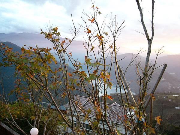 楓..或許該說是槭樹
