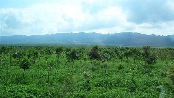花東縱谷的平原帶