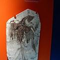 """這化石叫作""""聖賢孔夫子"""""""