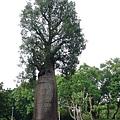 形狀很妙的樹