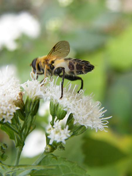 嗡嗡嗡 小蜜蜂1.JPG