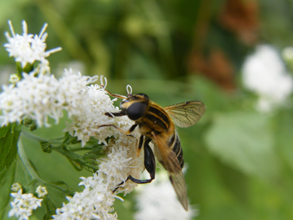 嗡嗡嗡 小蜜蜂2.JPG