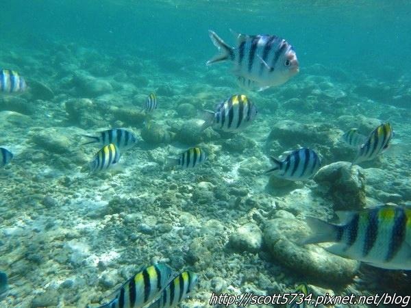 NALUSUAN04_浮潛看魚