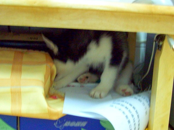 很愛躲到電腦桌下