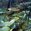不知名魚類