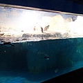 極區企鵝區
