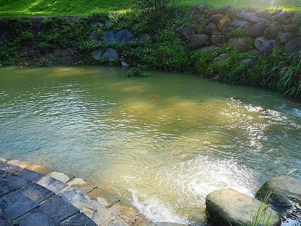 這個池區範圍較大,可以在這裡下水游泳~