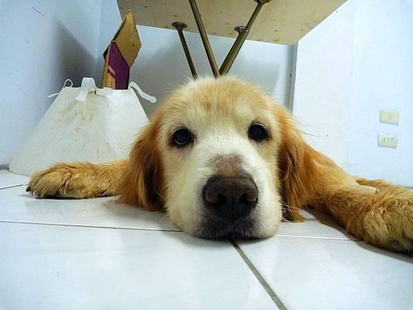 剛剛出去散步,累死我了~