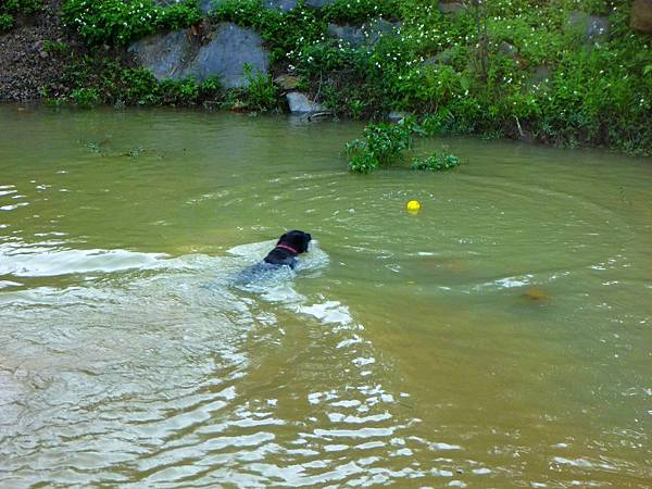 (影片) 要回去時遇到一隻小黑狗在玩球