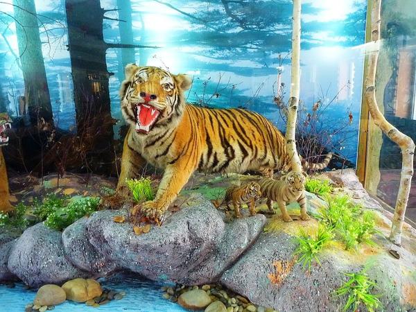 東北虎標本