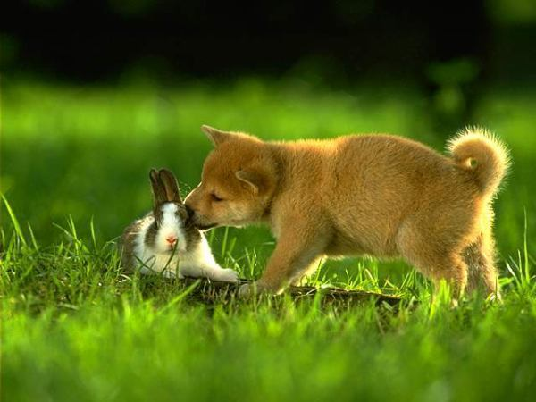 狗狗跟兔子.jpg