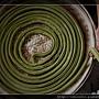 綠茶麵線~由粗變細的過程-5.jpg