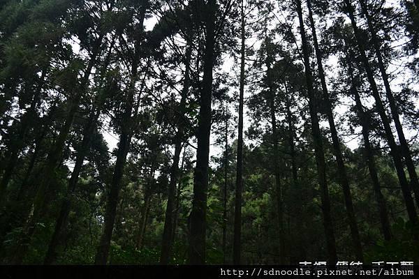 樹林.jpg