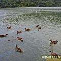 梅花湖-環湖腳踏車道[宜蘭旅遊] (13)