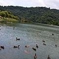 梅花湖-環湖腳踏車道[宜蘭旅遊] (15)