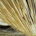 陽光下的手工麵線20130119_121454