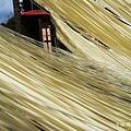 陽光下的手工麵線20130119_121503