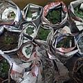2013/11 多肉植物Succulents
